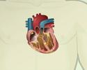 Electrocardiogram - ECG - recording
